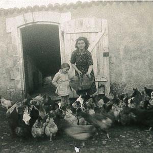 Ancienne photo poules Le Pas des Eaux à Angoulins