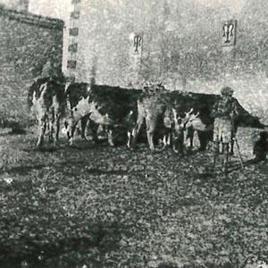 Ancienne photo ferme Le Pas des Eaux à Angoulins